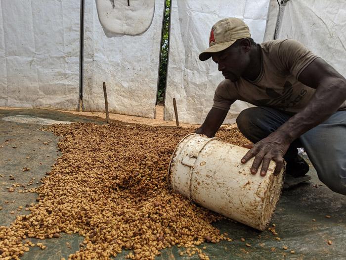 cafe kreyol coffee haiti farmers APCAB 2