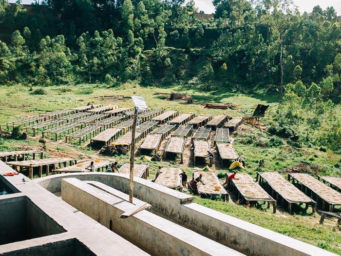 cafe kreyol organic coffee farmers Burundi Munkaze Washing Station 02