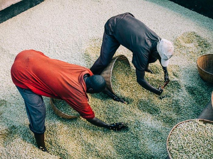 cafe kreyol organic coffee farmers burundi munkaze washing station