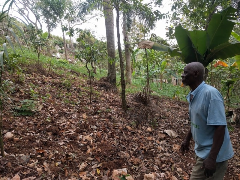 Philemon looks out over his leaf rust infected farm. There were once hundreds of coffee trees on this slope.